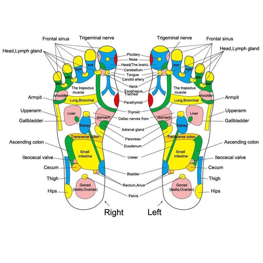 Refleksi Kaki Pijat L Batu Berjalan Spec Dan Daftar Harga Alat Alas Garuk Garukan Punggung Akupunktur Bata Perawatan Persegi Di Perlengkapan Mandi Kit Dari