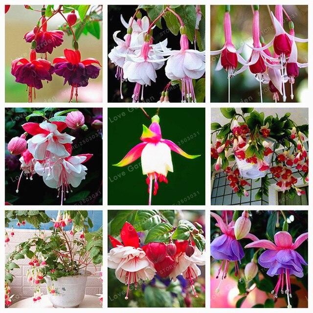 Фиолетовые двойные лепестки фуксия бонсай в горшке цветы бонсай растения в горшках Висячие фуксия цветы садовые растения 100 шт./пакет