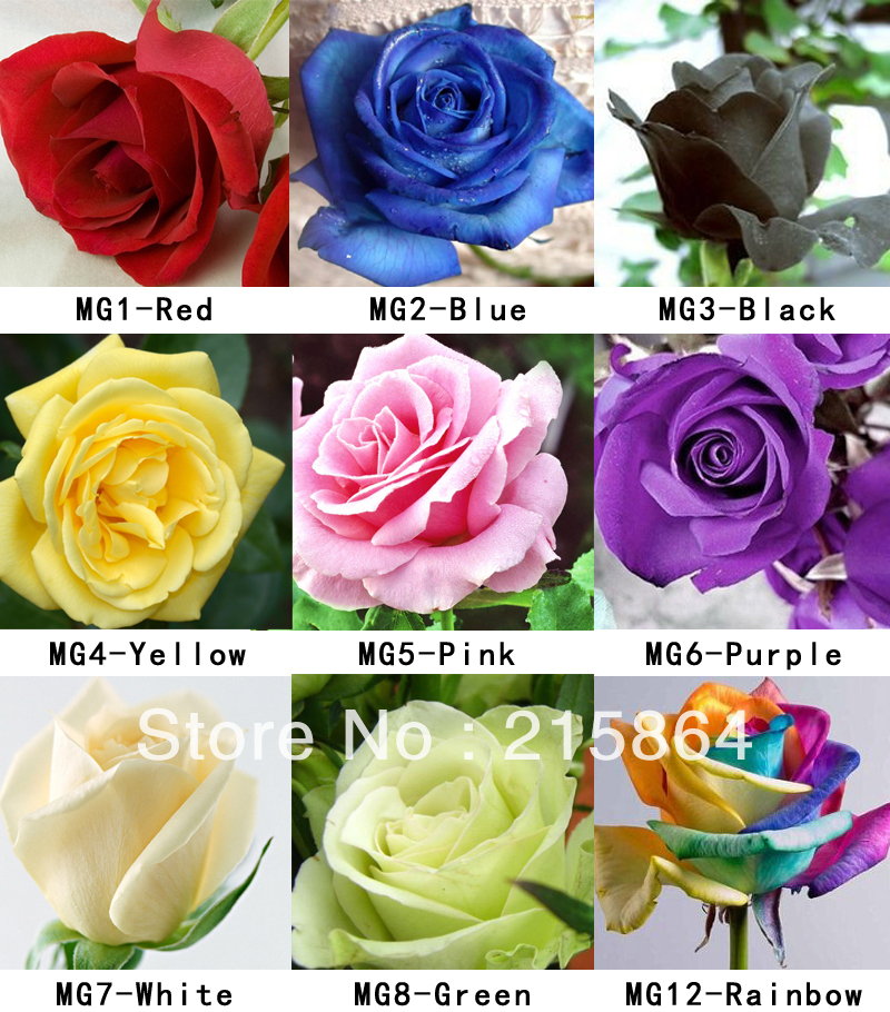 Buy 2000 seeds rose seeds include pink for Buy black and blue roses