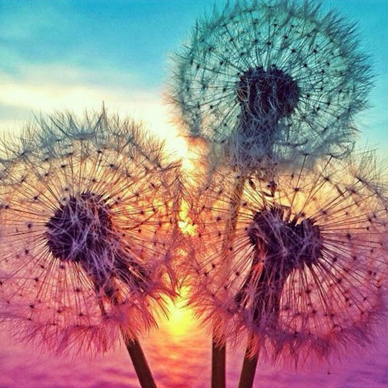 5D Diamond Painting DIY Semi-finished Dandelion Plant Flower Aesthetic Simple Style Home Bedroom Office Living Room Decoration