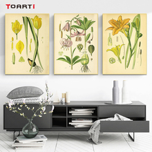 Retro poster and print modern canvas painting Vintage Botanical illustrations floral honeysuckle wall art murals chart pictures