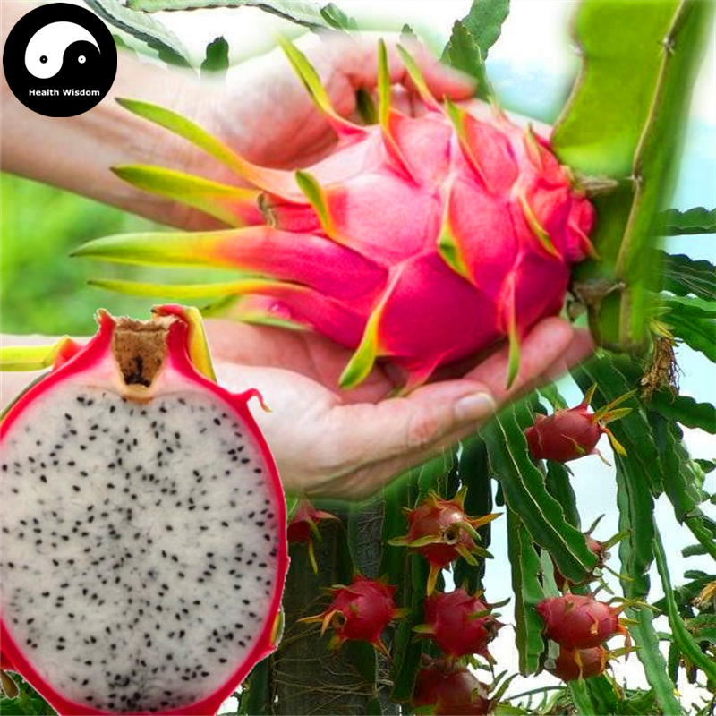 Buy Dragon Fruit Semente 100pcs Plant Hylocereus Undatus For White Pitahaya