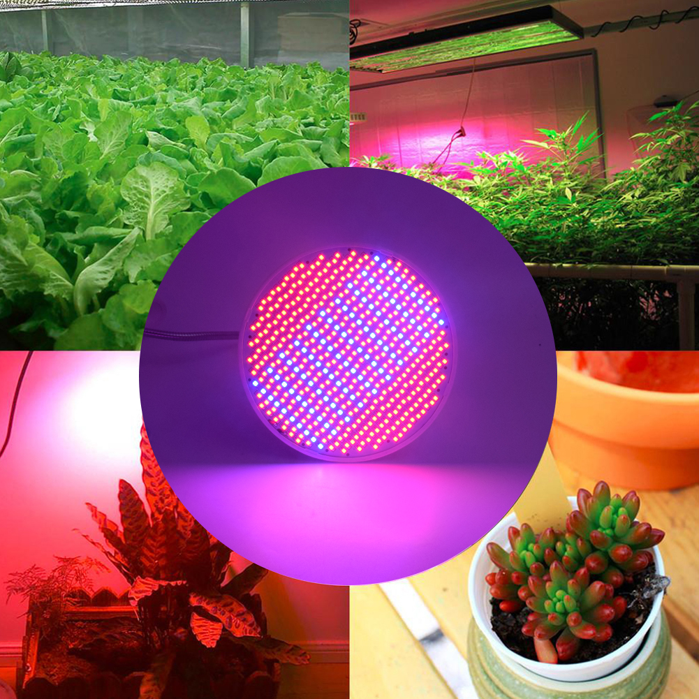 TSLEEN E27 Indoor LED Growing Lights 220V 4W 6W 8W 20W 33W 50W Red+Blue Lamp Clip Plant Lights For Flower Vegetable Hydroponics