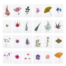 Смешанные прессованные Цветочные листья растения образцы наполнители для изготовления ювелирных изделий из эпоксидной смолы