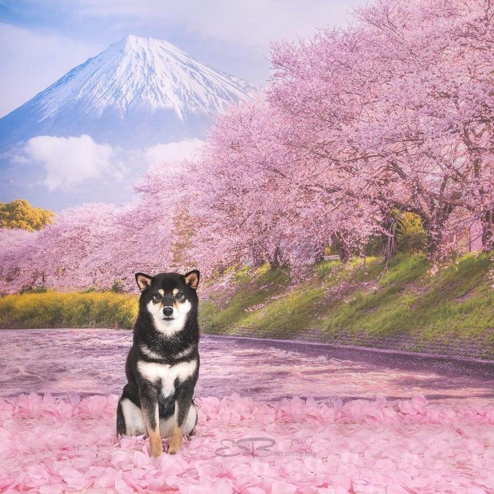 Allenjoy Japan Mountain Fuji River Backdrop Spring Pink Sakura