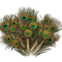 Wholesale Natural Rare Peacock Feathers Eye 5-10CM 2-4  for Crafts Pheasant For Jewelry Making Plumes Plumas