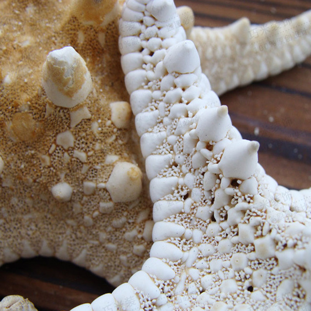 Natural Decorative Home Dried Starfish