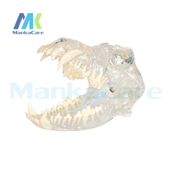Manka Care - Dog Dentition Model Oral Model Teeth Tooth ModelManka Care - Dog Dentition Model Oral Model Teeth Tooth Model