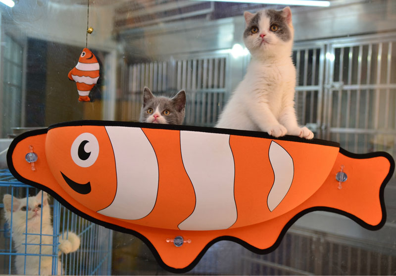 Cat Window Bed Cat Lounger Bed Hammock Sofa Mat Lounger Perch Cushion Hanging Shelf Seat with Suction Cup for Ferret Chinchilla 19
