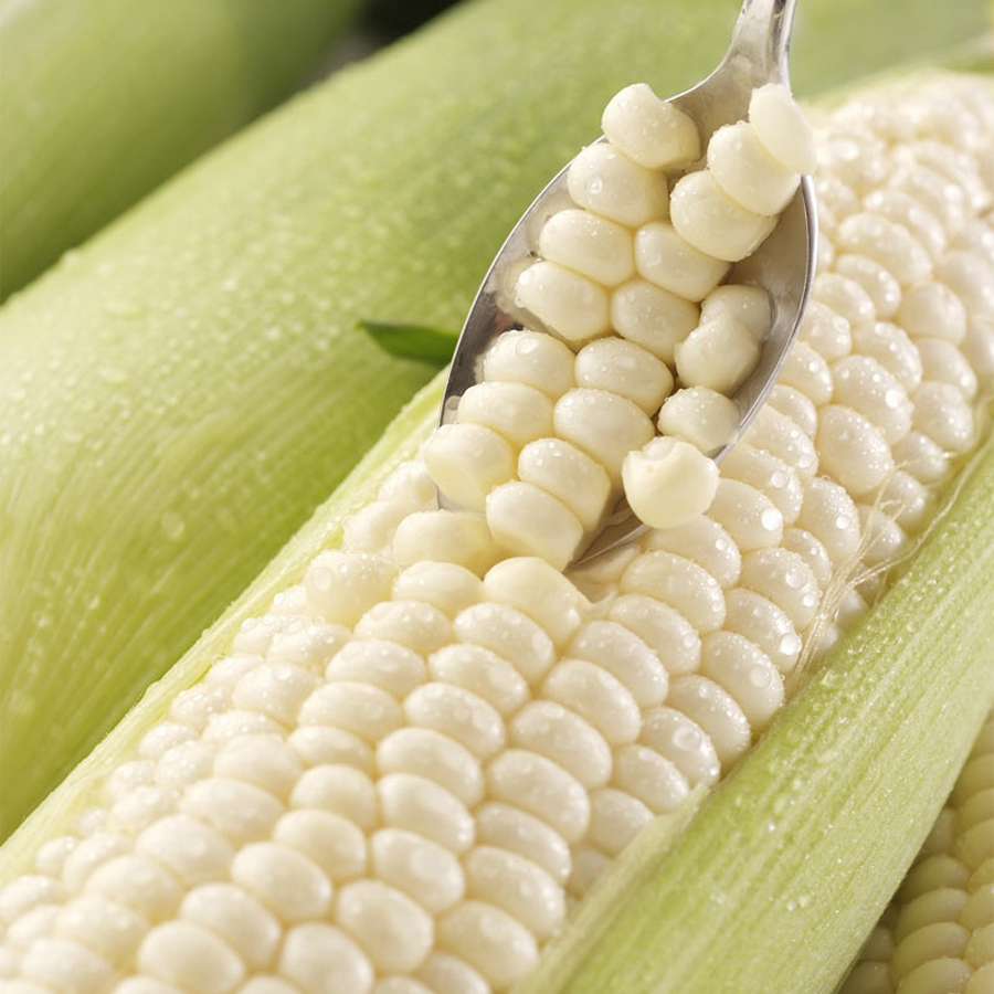 Aliexpress.com : Buy 10 White waxy corn seeds Special White Easy ...