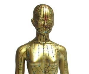 Image 2 - Modèle Meridian modèle dacupuncture humaine pour femme 48cm, 1 pièce