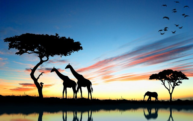 Tiere giraffe sonnenuntergang afrika seen reflexion elefanten sky ...