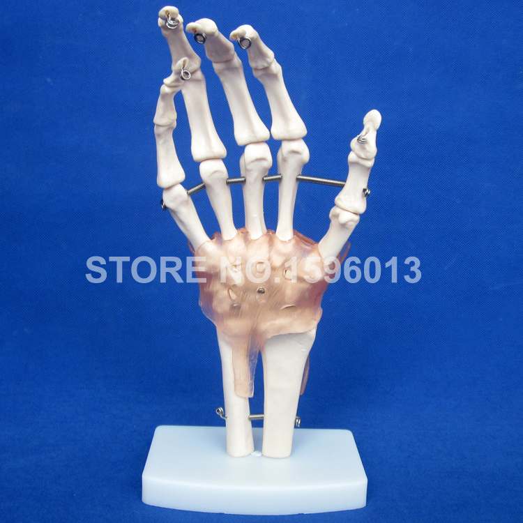 HOT Life-Size Hand Joint Model with Ligament,  Anatomical Hand Joint and Bone Model chapchal reconstruction surgery and traumatology hand surgery – bone and joint pathology