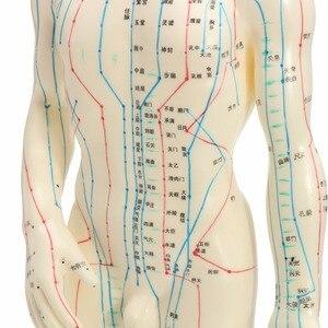 """Image 3 - """"ร่างกายมนุษย์รูปแบบการฝังเข็มชายเส้นเมอริเดียนรุ่นแผนภูมิหนังสือฐาน50เซนติเมตร"""