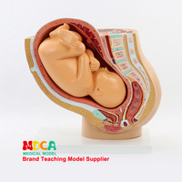 Full term fetal infant Maternal and Infant Embryo Development Model eaching utensils Midwifery teaching equipment Pregnancy