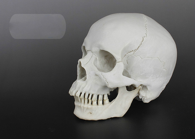 The Height Of  Resin Model Simulation Skull Hospital Creative Decoration Toy Props Ornaments  Vintage Home Decor