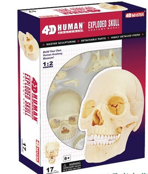 online get cheap human skeleton puzzle -aliexpress | alibaba group, Skeleton