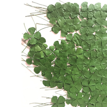 120pcs Clover Green Color On Both Sides Pressed Dried Flower Dia 1 5 2cm Free