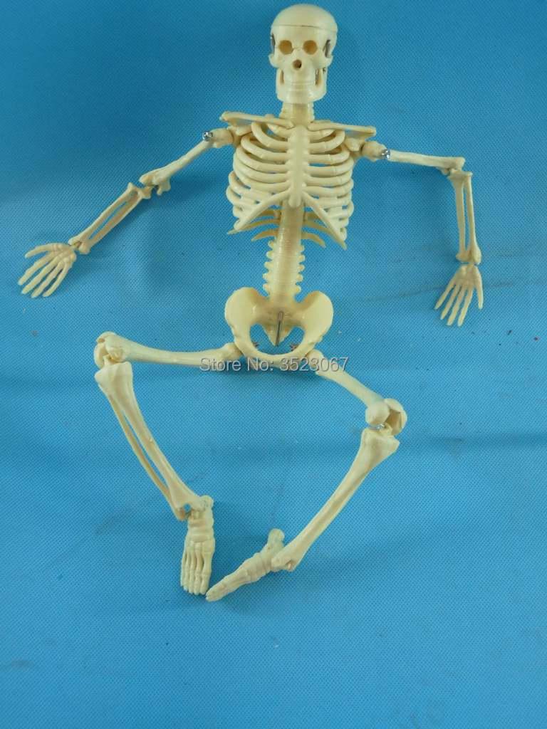 Anatomical Human Skullanatomy Skeleton Model Medical Poster Bonnet