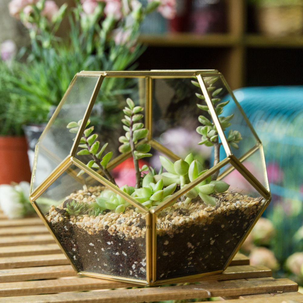 Tabletop Display Tabela Mbjellëse Lule Fern Moss Flower Plant Plant Planter Box Fairy Garden Polyhedron Glass Gezuar Terrarium Bonsai