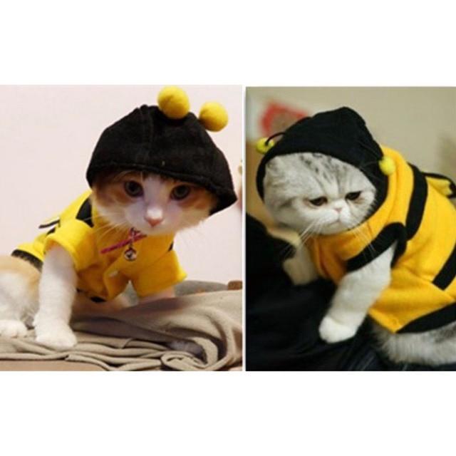 1Pcs Pet Clothes Cute Bees Dog Cat Clothes Soft Fleece Teddy Poodle Dog Clothing Pet Product Supplies Accessories 7z-ca217 6