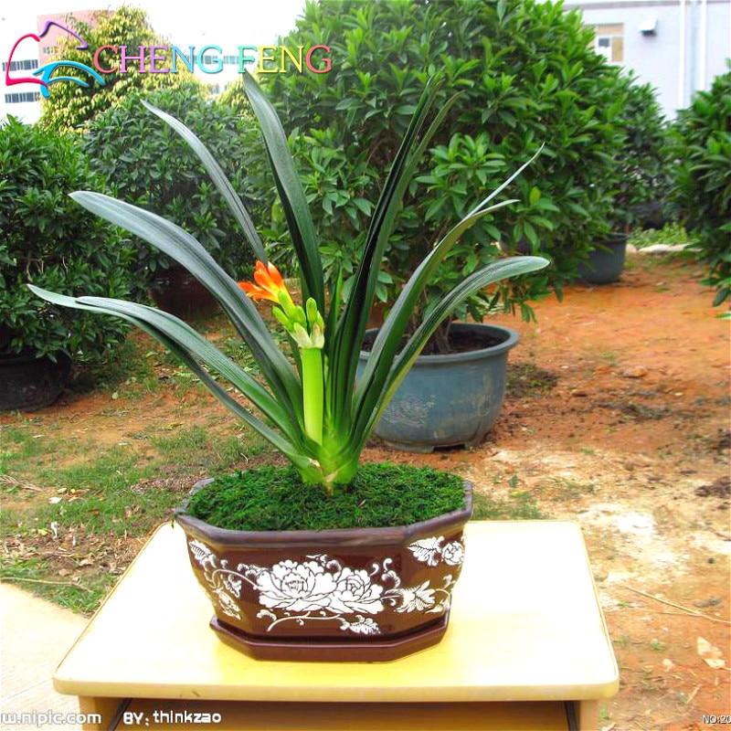 Garden plant names reviews online shopping garden plant for Cheap garden plants