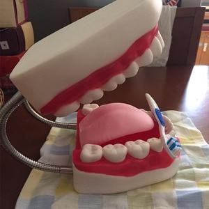 Image 5 - TDOUBEAUTY Zes Keer Vergroting Volledige Mond Model Tand Onderwijs Model Dental de hoogwaardige Presentatie Gratis Verzending