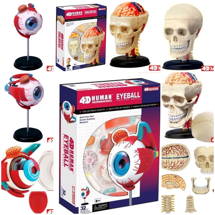 Master 4d Eye Model 32 Pcs Assembled Human Anatomy Model New 3d