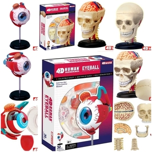 Master 4D eye model 32 pcs assembled human anatomy new 3D structure of the puzzle(China)