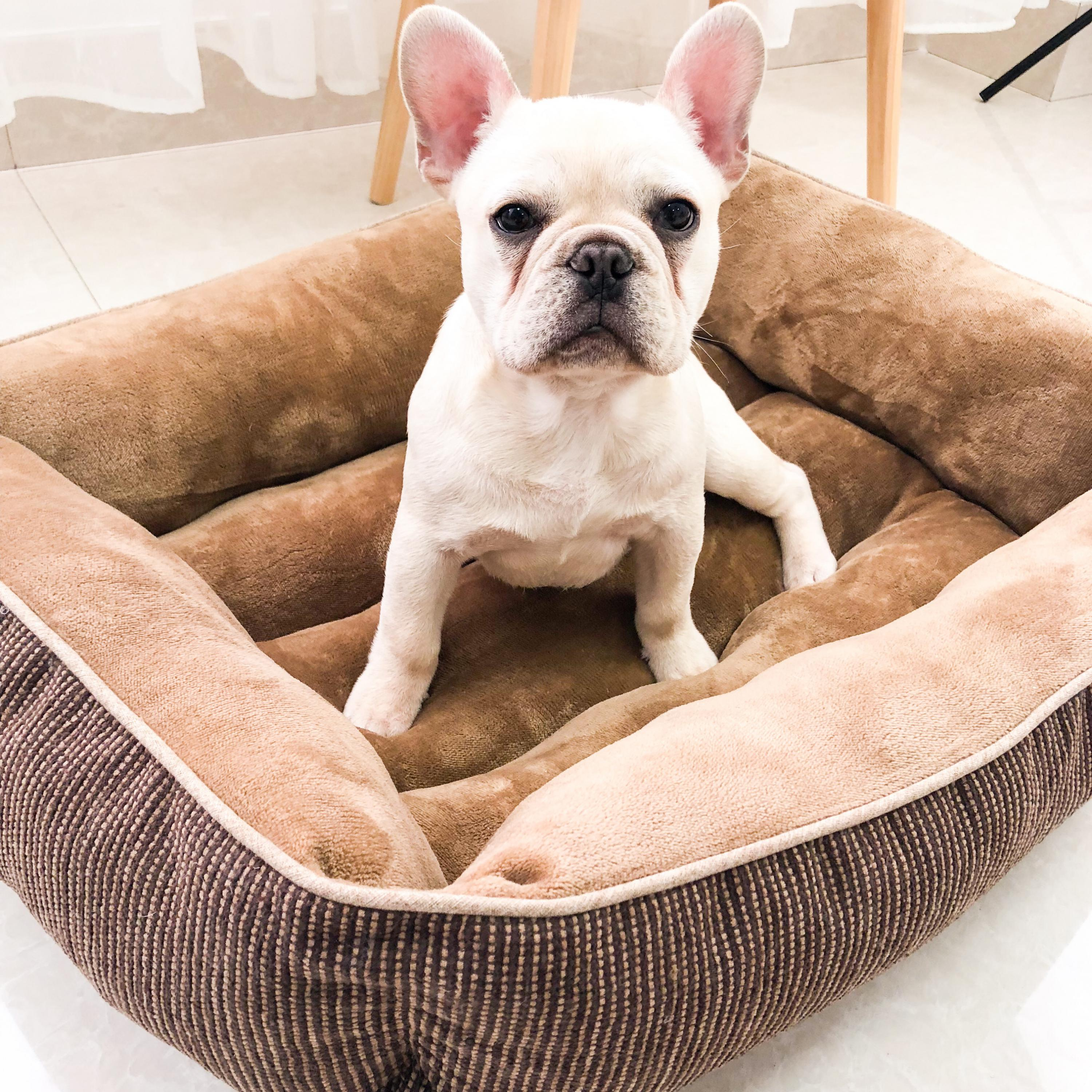 luxury cats Beds Nest pitbull dog house for small dogs Thick and warm plush medium dogs bed soft waterproof dog bed