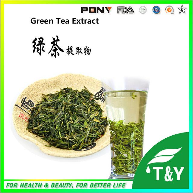 Fabricante estável fornecimento de extrato de chá verde/chá verde extrato em pó 100g