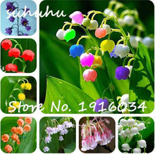 200Pcs Lily Of The Valley Flower Indoor Rare color Bell Orchid Bonsai Plants Balcony potted DIY Home garden christmas decoration(China)