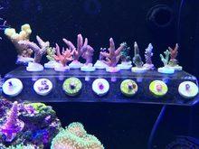 SPS phyto plus – support de pêche en corail, mini nano aimant puissant fixe aquarium poissons récif avion incliné