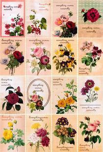 Flowers  Iron-on Transfers For Clothes Heat Transfer Press Patches Stickers Drop Shipping Wholesale(no 789342569