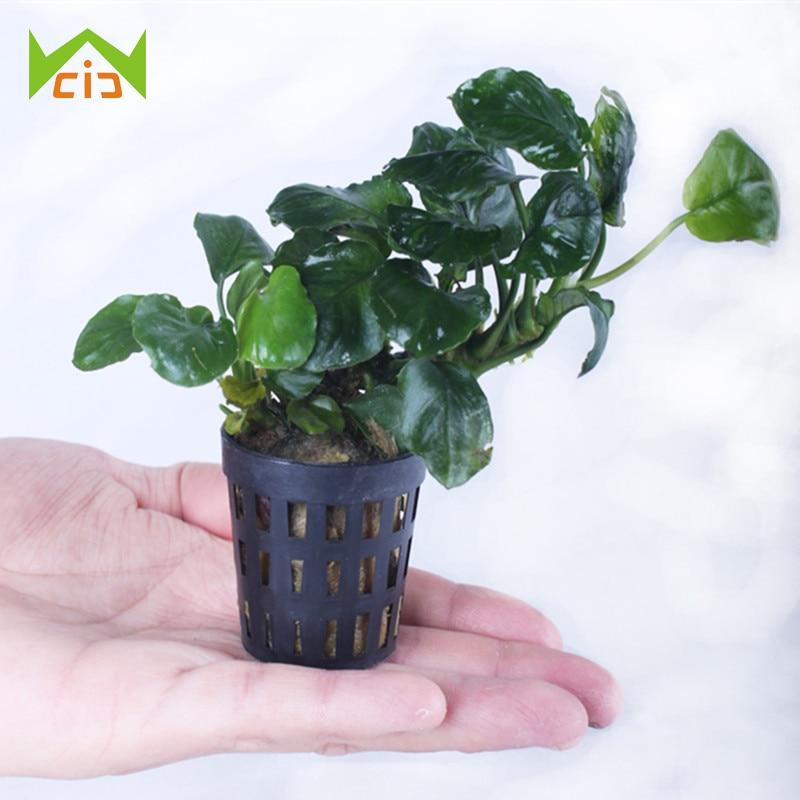 Hydroponic  Aquarium Planting Basket Flower Pots Nursery Sponge  Seed Trays