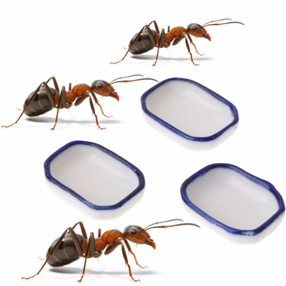 Container Ants-Supplies Nest House Feeding-Bowl Ant Farm Insect Water-Food Food-Feeder