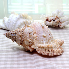 Charming Decorative Organic Mediterranean Seashell