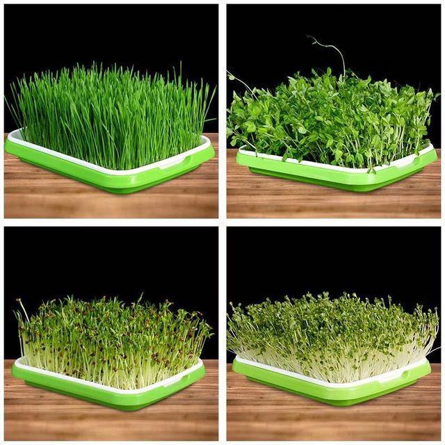 Nursery Trays Lids Durable Pots Flower Plants Vegetable Seeds Grow Box Tray Insert Propagation Seeding