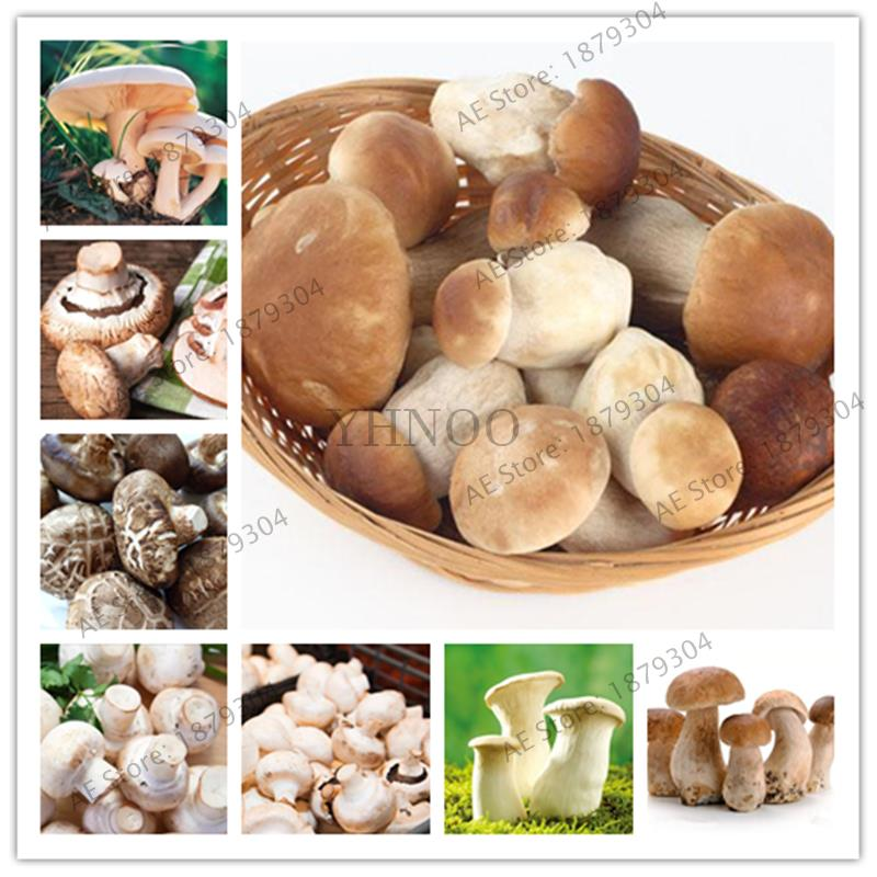 1000pcs Edible Mushroom Bonsai Delicious Nutritional Value Vegetables Green Organic Health Garden Essential
