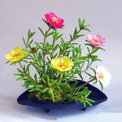 Buy 400pcs indoor flower plants sun flower seeds cheap potted flower seed from - Best flowering plants for indoors ...