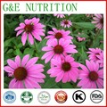 Plant Extracts Powder Echinacea hot sale and top quality echinacea purpurea extracts Polyphenole10:1 200g