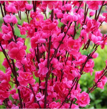 Lule mëndafshi të reja të bukurosheve Degë artificiale bukuroshe - Furnizimet e partisë - Foto 1