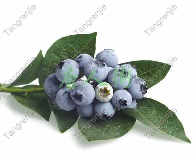 1KG Bilberry extract 25% anthocyanidins  Free shipping