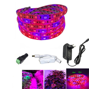 5050 LED Grow Lights DC 12V waterproof Growing LED Strip Plant Growth Light Set with Power Adapter and Switch 1M 2M 3M 5M(China)