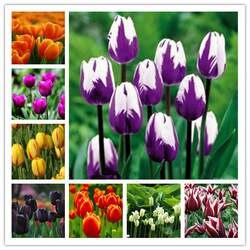 200 шт. тюльпан бонсай тюльпан цветок красивый Tulipanes цветочных растений для садовых растений (не луковицы тюльпанов) цветок символизирует