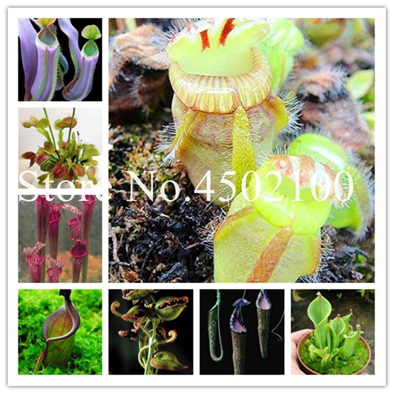 50 Pcs Seeds Nepenthes Garden Balcony Potted Bonsai Plants Carnivorous Plantas H