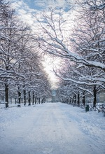Laeacco Winter Snow Trees Road Scenery Baby Children Photography Backgrounds Custom Photographic Backdrops For Home Photo Studio