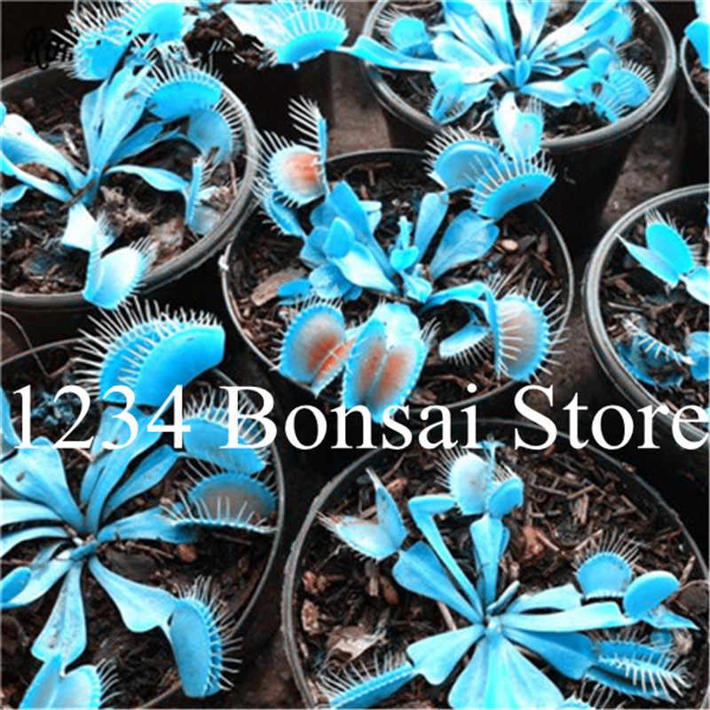5000 قطعة Dionaea Muscipula العملاق كليب فينوس flyفخ الشتلات بوعاء النباتات الحشرية فلاي الماسك بونساي البذور نادرة جدا