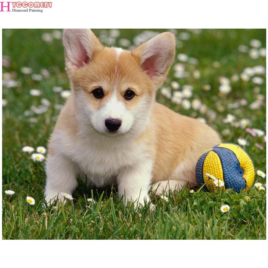 imagen de perro - HD1200×900