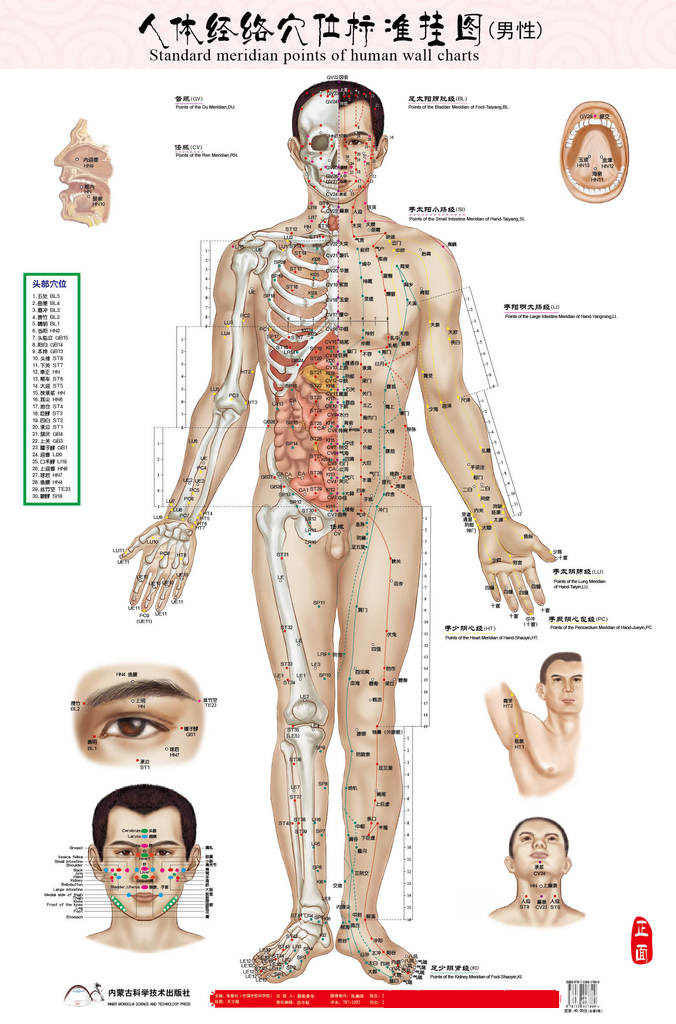 Male men human meridian points Wallmap acupuncture massage point map a full human flipchart HD 3 chinese and English male female